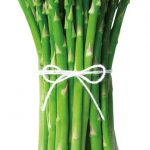 A bundle of Mary Washington asparagus, standing vertically, tied with a white piece of yarn against a white background