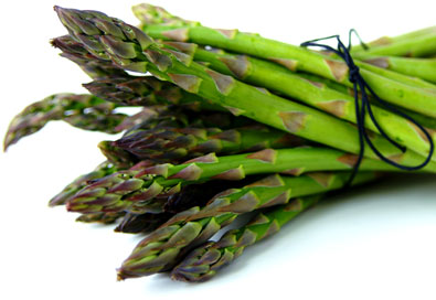 A horizontal bundle of KB3 Hybrid Asparagus, tied with a piece of black string against a white background