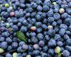 Blueberry_legacy-2