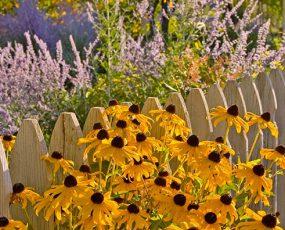 Bareroot Perennials