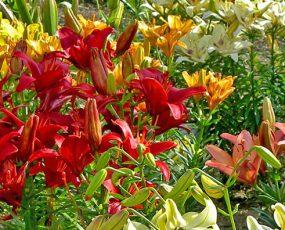 Spring Flowerbulbs