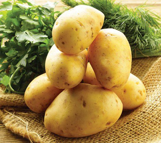 potato-yukon-gold-4