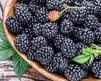 Blackberry_
