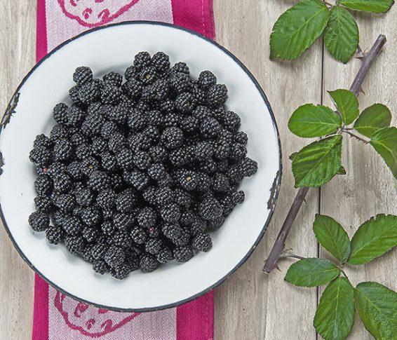 Blackberry_EbonyKing