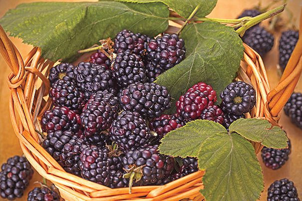 Blackberries in a basket on wooden background
