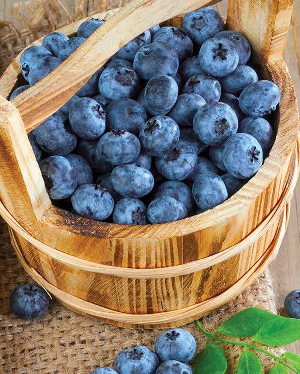 Blueberry 'Biloxi' - DeGroot