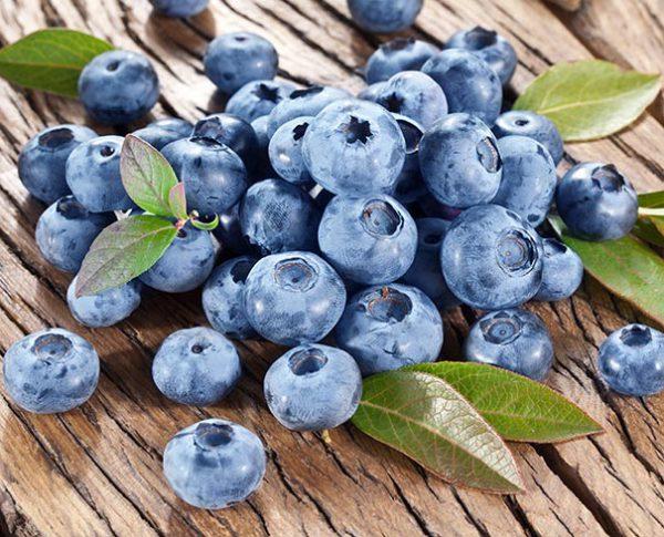Blueberry_Bluecrop