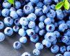 Blueberry_Elliott2