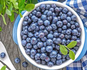 Blueberry_NORTHLAND