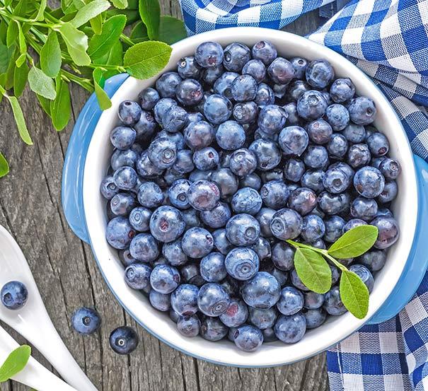 Blueberry Northland De Groot Inc Perennials