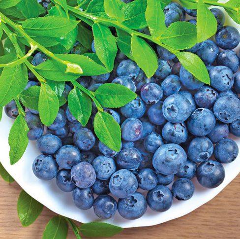 Blueberry_SunshineBlue