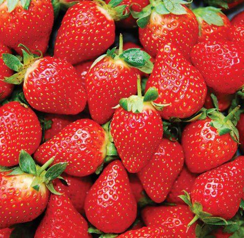 Strawberry_Eversweet