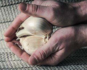 Garlic_Elephant