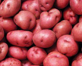 Potato_Red