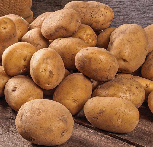 Potato_Russet_Norkotah
