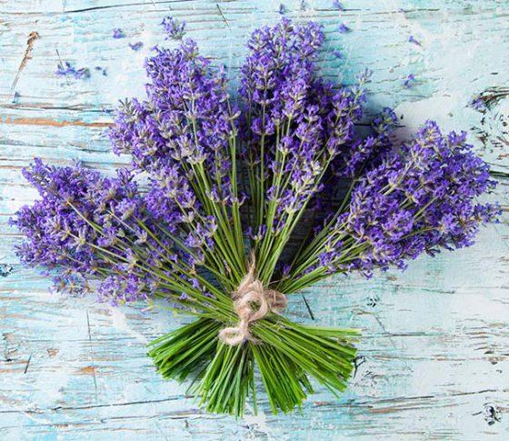 Lavender2