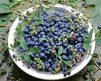 Blueberry Biloxi 2