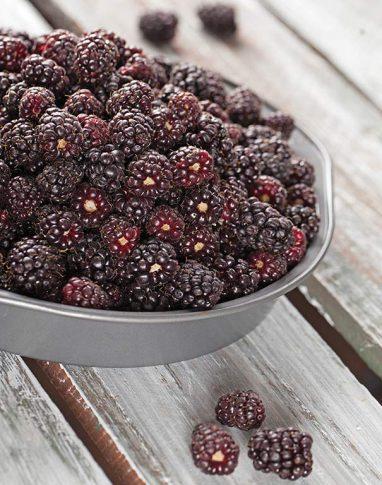 Boysenberries 1