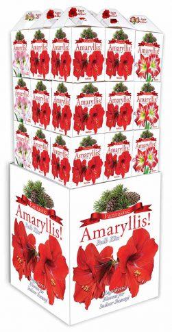 AmaryllisBoxes W Diplayer WhiteBK Web
