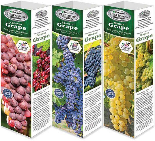 GR518 Grape Assortment Web