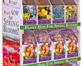 Four shelf wooden display rack with 15 open top bin boxes filled with packages of flower bulbs.